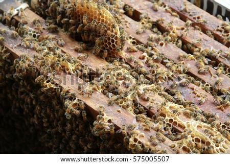 honeycomb #575005507