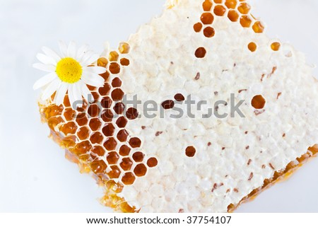 honeycomb and flower