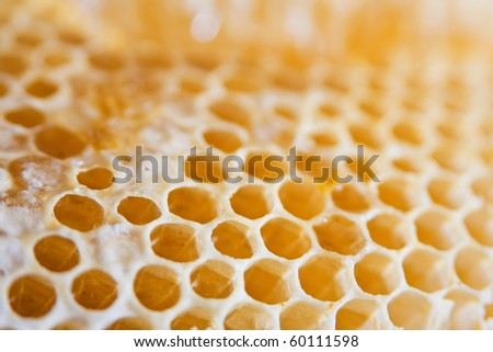 Honeycomb cells close-up with short DOF