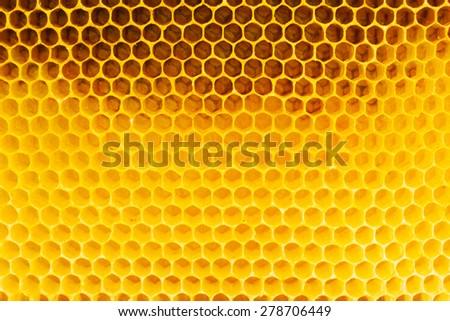 Honeycomb in beehive, closeup