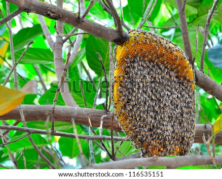 honeycomb on the tree,insect,animal