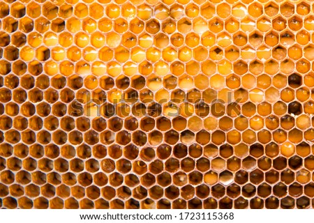 Photo of  honeycomb with honey as very nice natural background