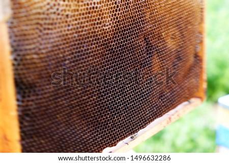 Honeycombs, nice natural golden honey texture without honey #1496632286