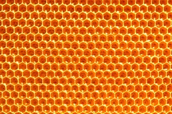 Honeycombs with honey. Natural background. Nectar Apiculture