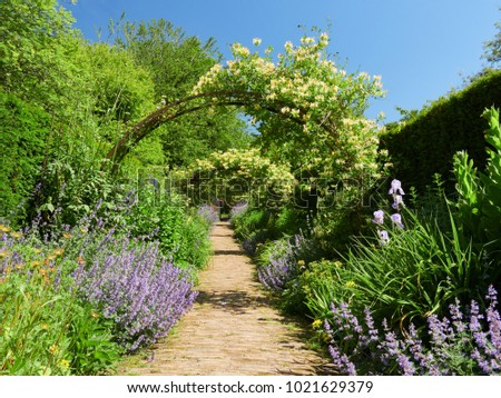 Honeysuckle arches over a garden path  on a sunny day in an English country Garden, UK.