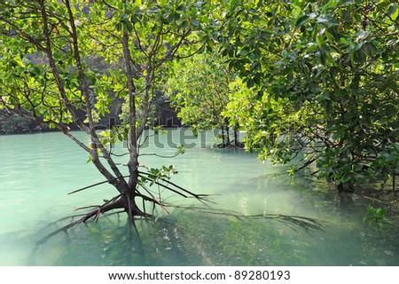 Hong Island Lagoon, Krabi, Thailand