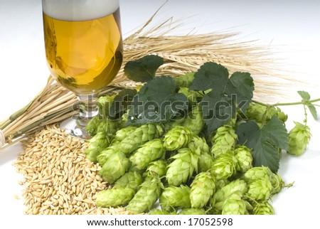 hop cones with beer