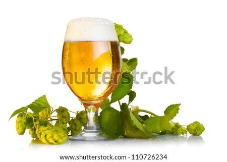 Hop cones with beer isolated on white