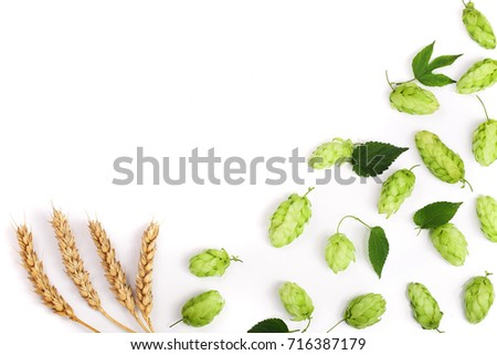 hop cones with ears of wheat isolated on white background close-up. Top view #716387179