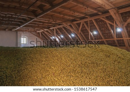 Hop stored after harvesting in a traditional store house