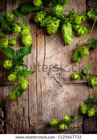 Hop twigs frame over wooden cracked table background. Vintage toned. Beer ingredients. Beautiful fresh-picked whole hops with green leaves border design close-up. Brewing concept, Vertical image #1129667732