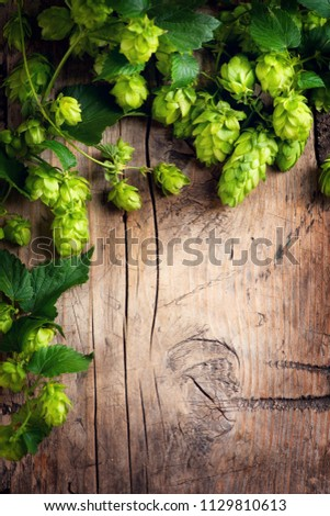 Hop twigs frame over wooden cracked table background. Vintage toned. Beer ingredients. Beautiful fresh-picked whole hops with green leaves border design close-up. Brewing concept, Vertical image #1129810613
