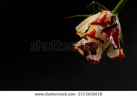 Hopelessness,Innocence lost through tragedy, grief and mourning of a early loss conceptual idea with bleeding white rose with drops of blood dripping isolated on black background #1513658618