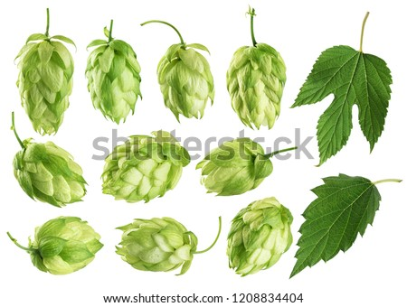 Hops and hop leaves isolated on white background. Collection with clipping path.