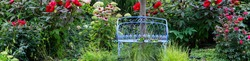 Horizontal banner of Vintage blue bench in a lovely cottage garden with red hibiscus white hydrangeas and cherry red knockout roses