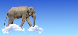 Horizontal banner with elephant above clouds on blue sky background. Cute elephant in the sky. Fantastic scene with an elephant walking on the clouds. Mock up template. Copy space for text