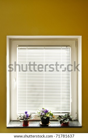 Horizontal blinds on window with three houseplants