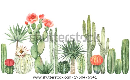 Horizontal border with colorful blooming cacti, watercolor wallpaper isolated on white background. Greenery landscape in mexican style, floral garden.