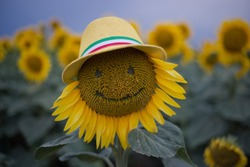 horizontal bright frame of a single sunflower in a hat with eyes and with a smile on the background of a field of sunflowers