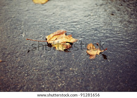 Horizontal color image of some brown and yellow autumn leaves laying on the ground on a cold rainy day. Peaceful image with a mix of warm vibrant colors and a cold feeling.