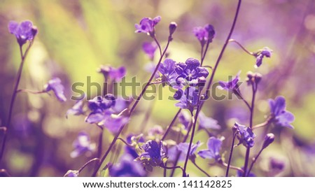 horizontal color image of spring flowers in vintage colors
