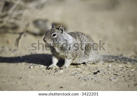 Horizontal image of a squirrel in the wilderness.