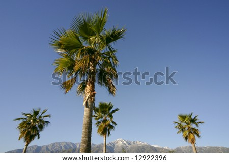 Horizontal image of palm trees and snow-capped mountains