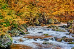 Horizontal shot of a flowing Smoky Mountain stream with Autumn leaves.