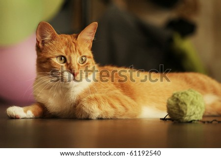 horizontal shot of cute red cat lying on the floor