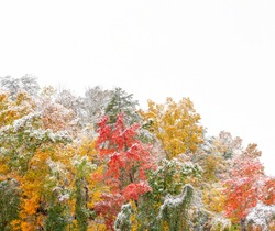 Horizontal shot of Smoky Mountains Fall Colors With a Dusting of Snow and white copy space at the top.  Shot diagonally.