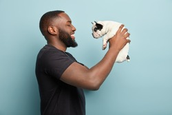 Horizontal sideways shot of happy black man with thick bristle, being in good mood, plays with funny puppy, holds french bulldog, makes sure dog feels comfortable in hosts hands, isolated on blue wall
