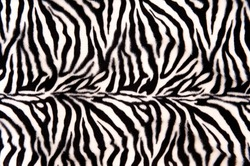 Horizontal striped zebra pattern with curves and lines
