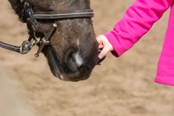 Horizontal View of Close Up of an Hand of  A Little Girl Holding the Bridle of a Horse at the Equestrian School. Monteiasi, South of Italy