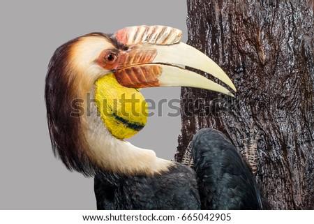 Hornbill Great hornbill, Great pied hornbill, Hornbill, selective focus