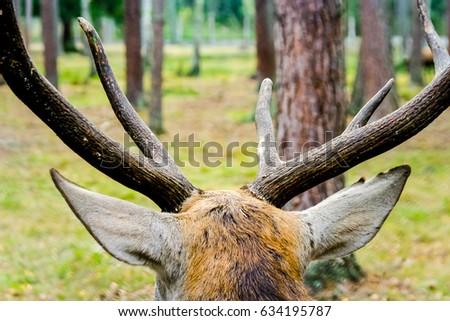 Horns,Moose,elk