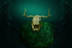 Horny skull on mossy rock in dark blue mysterious forest framed by fir trees. Shamanic pagan ritual. Halloween background