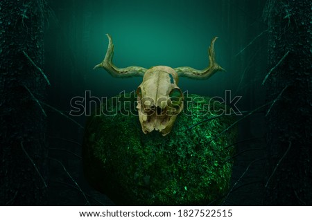 Horny skull on mossy rock in dark blue mysterious forest framed by fir trees. Shamanic pagan ritual. Halloween background Stockfoto ©