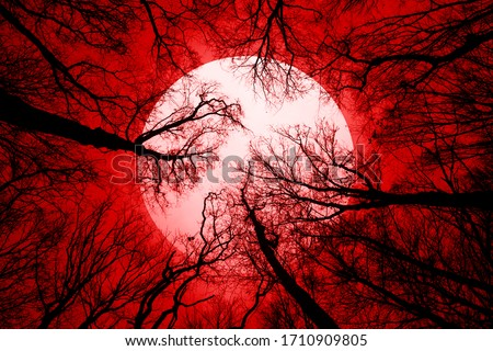 horror forest background, full moon above trees, apocalyptic scene ストックフォト ©