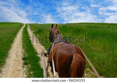 Shutterstock Horse