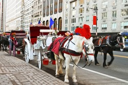 Horse and carriage at Central Park, New York City, USA