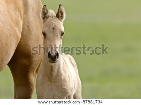 Horse and colt Saskatchewan Canada
