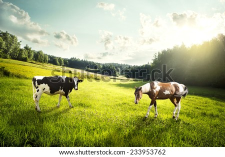 Horse and cow pasture on a glade