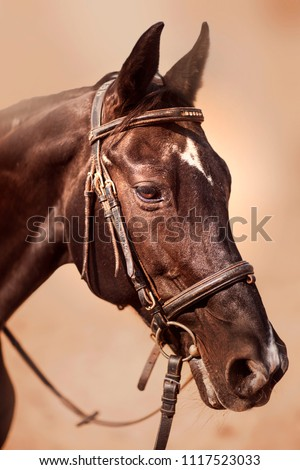 Horse and eyes. Portrait. Artistic photo of a horse on a farm. Beautiful animal. Brown Horse. Farm. Ranch. Summer. Moscow. Russia