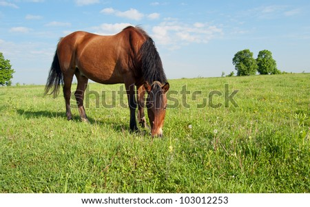 horse and field close up