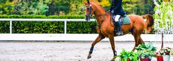 Horse and rider in uniform performing jump at show jumping competition. Horse horizontal banner for website header design. Equestrian sport background. Selective focus.