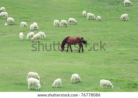 horse and sheep grazing on the farm