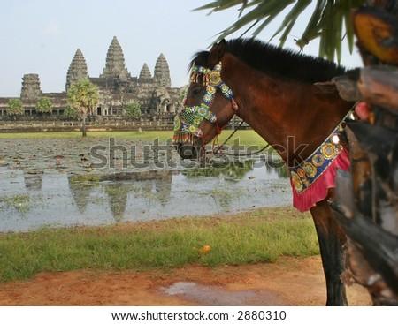 Horse at Angkor Wat
