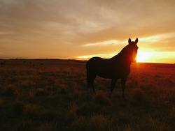 Horse at sunset with South Brazil, Countryside nature - Ranch