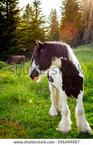 Horse at the forest