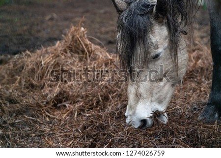 White brown donkey eating grass on a field  Images and Stock